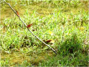 dragonflies in the prairie