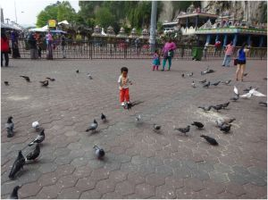 boy chasing the pigeons