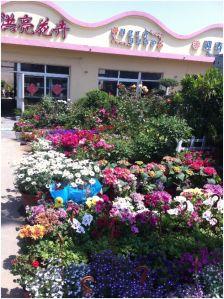 flower shops2