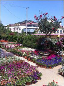 flower shops3
