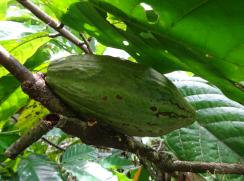 bali fruits2