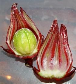 rosella2