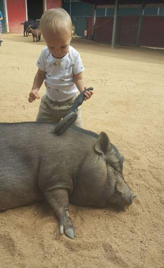 petting-zoo2