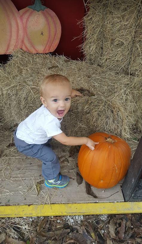 pumpkin-excitement