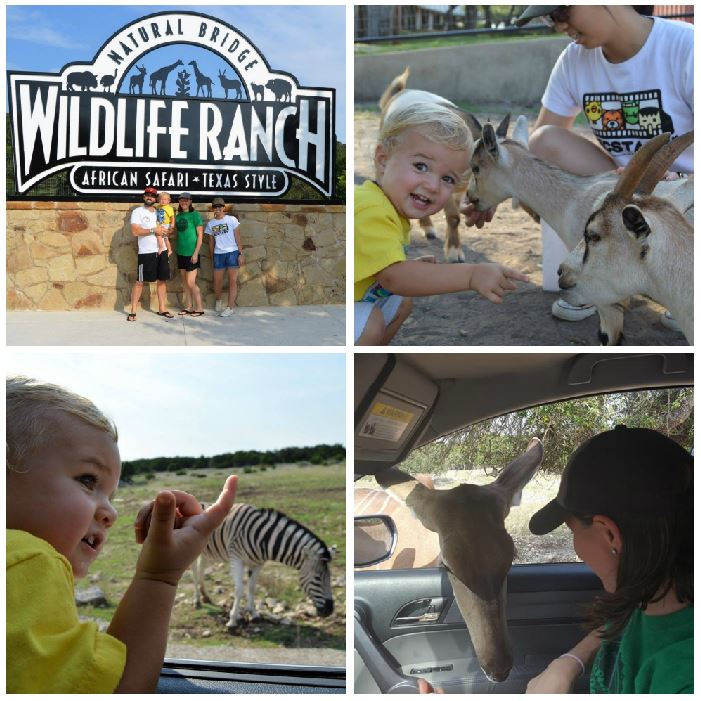 wildlife ranch collage